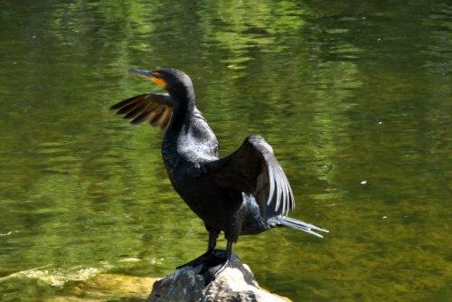 ever kirby bird