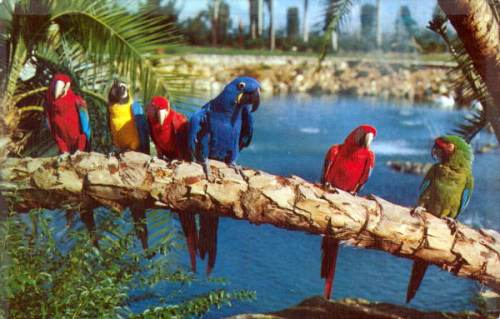 florida busch birds
