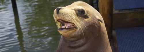 florida dolphin sea lion