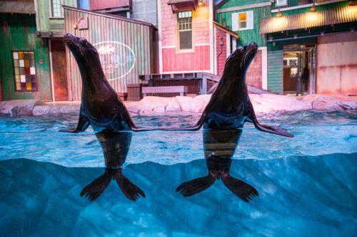 atlanta aquarium sea lions