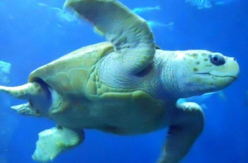 charles aquarium 2