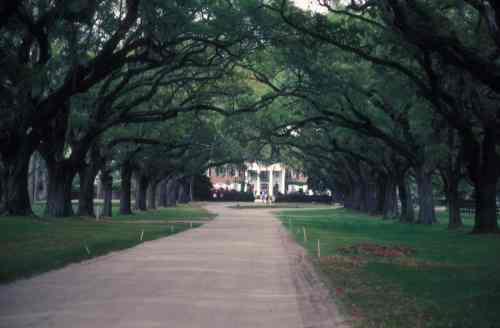 charles boone oaks