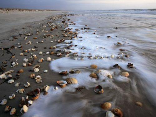 geo cumberland shells