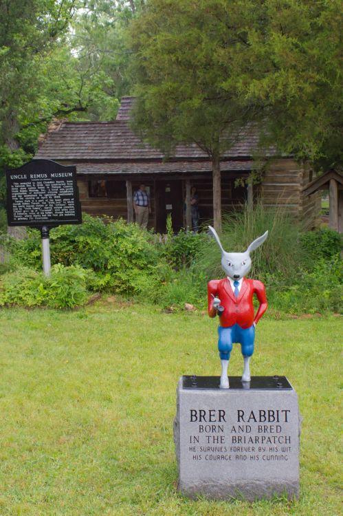 geo rabbit