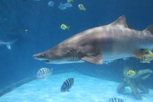 nc-aquarium-roanoke