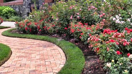 nc rose garden