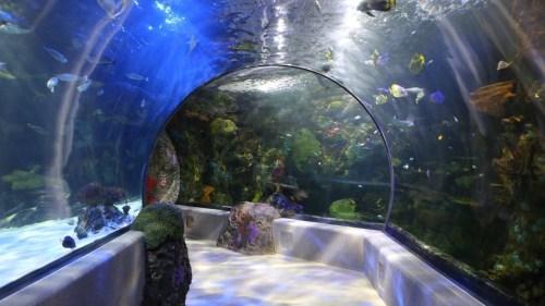 virg aquarium