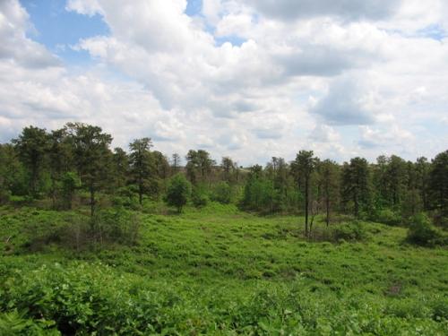 al preserve