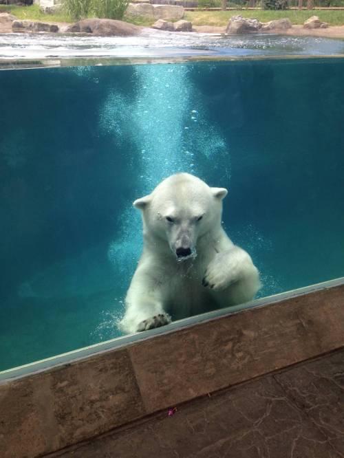 buf del zoo