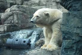 new central zoo polar