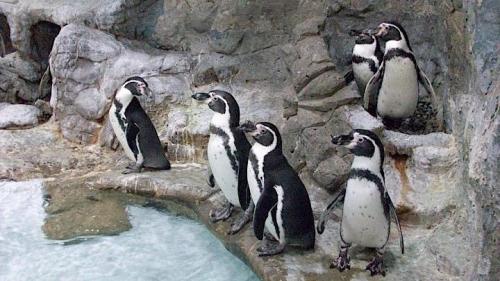 niagara aquarium 2