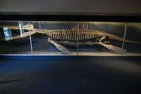 cam natural history kron wiki