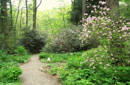 mass Garden_in_the_Woods_-_IMG_2462