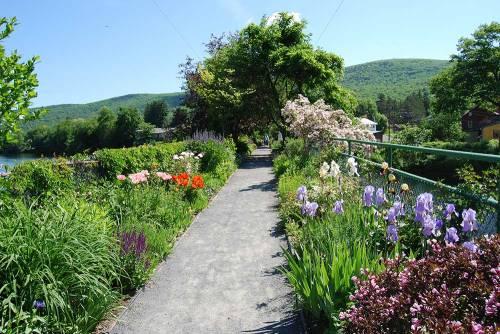 mass bridge-of-flowers