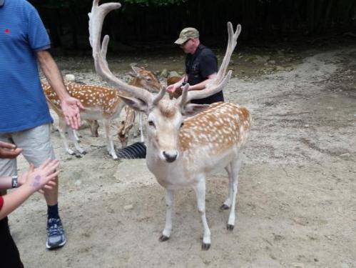 mass zoo deer