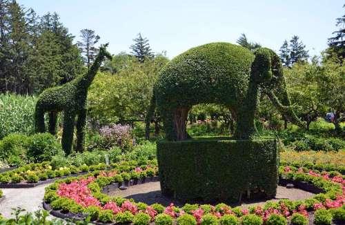RI topiary 2