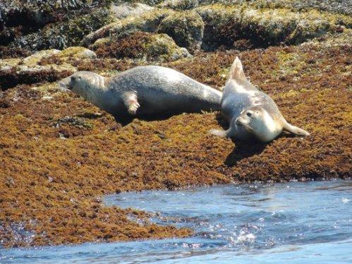 ma monhegan-boat-line seals