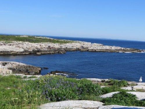 new hamp appledore cove-on-appledore-island
