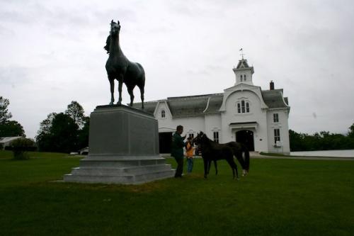 vermont morgan horse farm 5