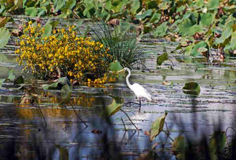harry wildwood egret