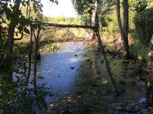 harry wildwood-park