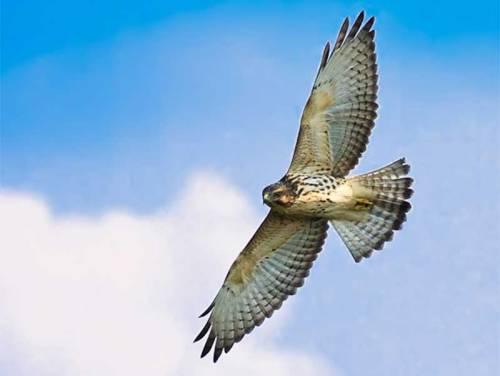 pen hawk 2