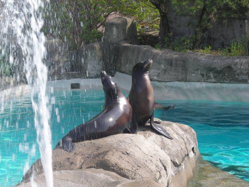 pit zoo sea lions