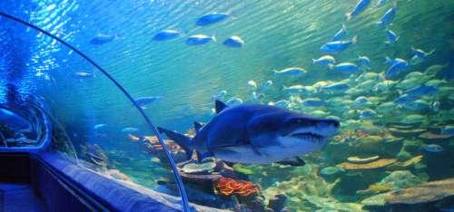 cleve aquarium