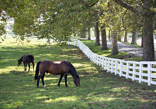 kent horse park 2