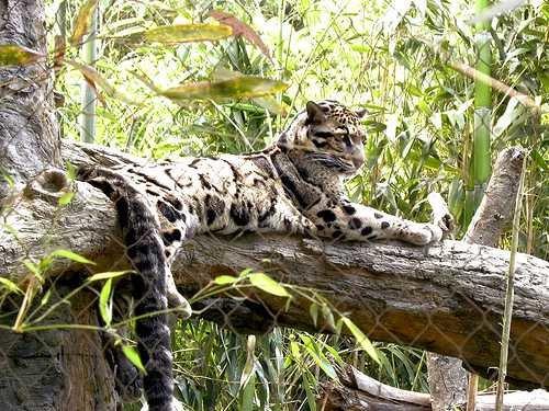 nash zoo 2