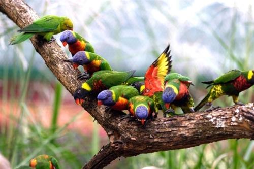 nash zoo parrots