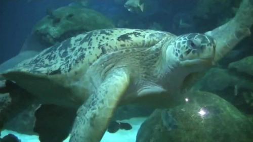 ten aquarium turtle