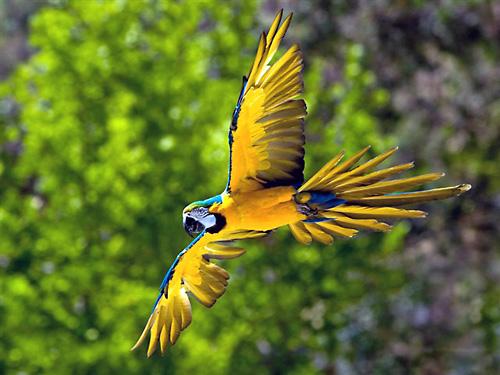 ten Parrot__Mountain_and_Garden_of_Eden_(005)
