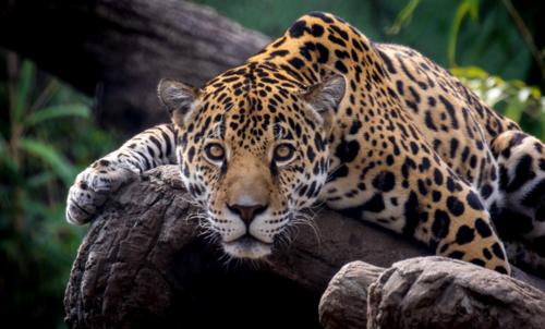 birm zoo