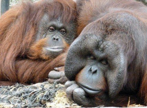 jack zoo monkey