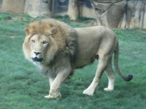 mont zoo 2