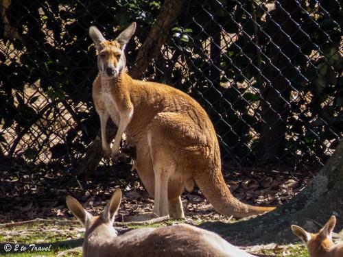 mont zoo 3