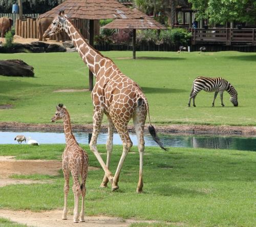mont zoo.jpg