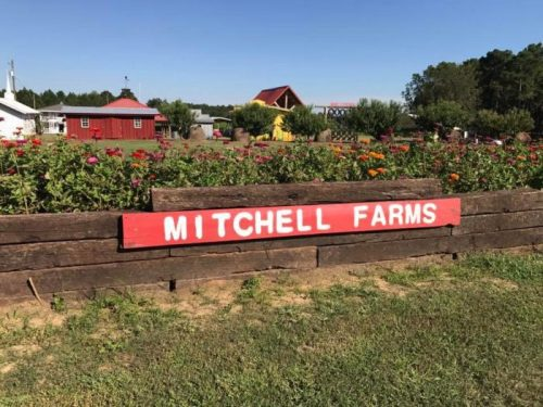 M mitchell farms
