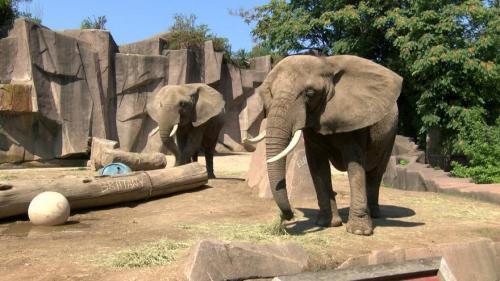 mil zoo