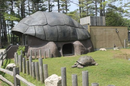 wis zoo turtle