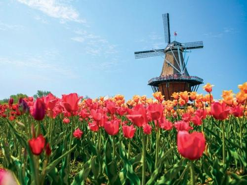 holland windmill-island-gardens-470-993