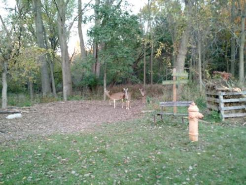 lansing nature deer