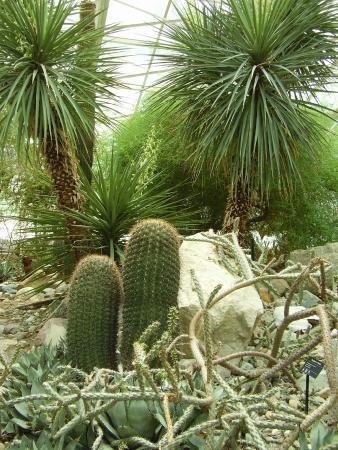 fort wayne boranic desert
