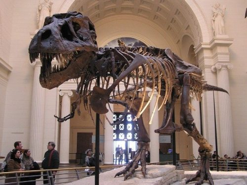 illinois field-museum-natural-history-chicago