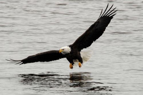 ill matthiessen eagle