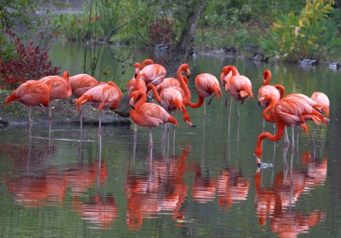 mizz zoo flamingo