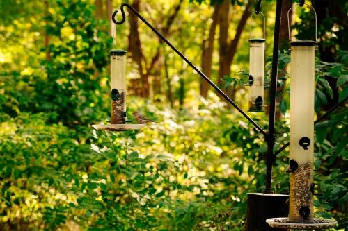 spring Adams-Wildlife-Sanctuary2.jpg