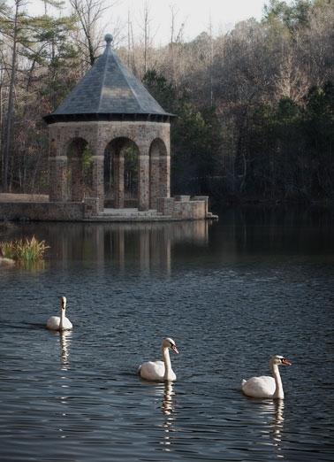 ark wildwood swans