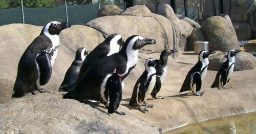 ark zoo penguins